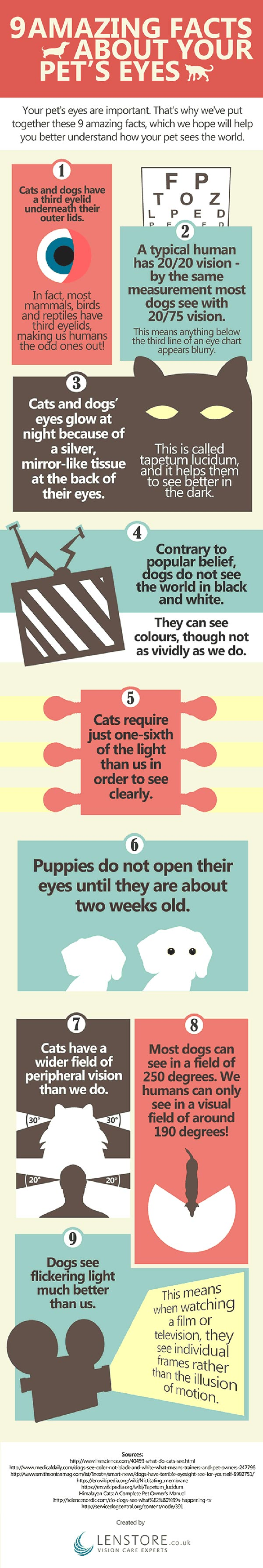 Infographic 9 pet eye facts