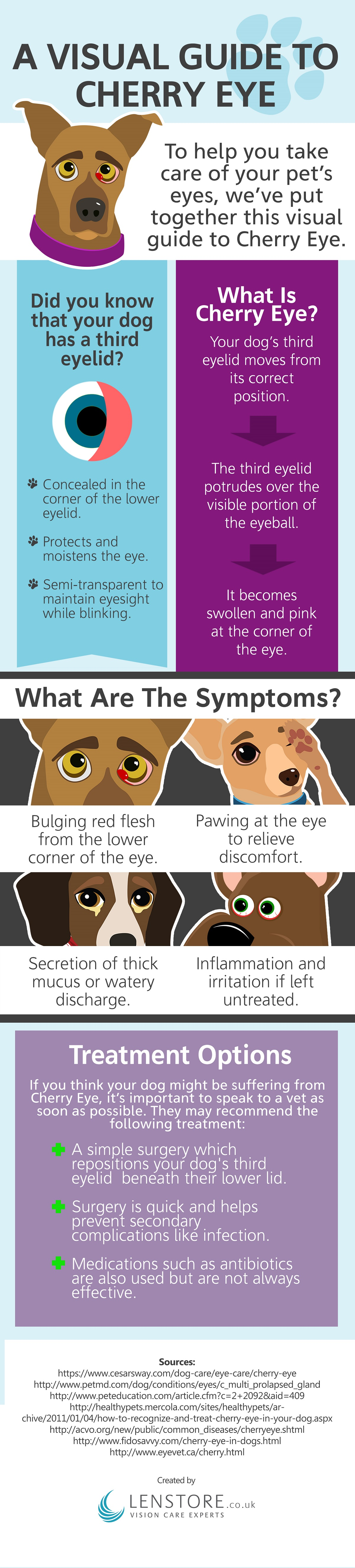 Cherry eye in dogs and cats infographic
