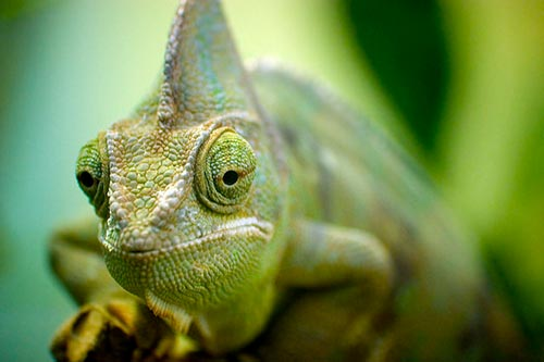Do Lizards See Colors? | Animals - mom.me