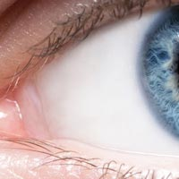 An easy guide to your eye's anatomy | Lenstore co uk