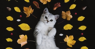 Cat surrounded by leaves
