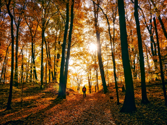 Man walking in the forest surrounded by autumn foliage