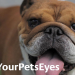 Love Your Pets Eyes Dog image