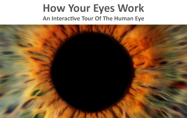 How your eyes work an interactive tour of the human eye lenstore how your eyes work an interactive tour of the human eye lenstore ccuart